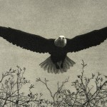 """Eagle""  - Aquatint Print by Steve McMillan"