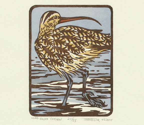 """Long-billed Curlew"" Hand-colored linocut print by Chandler O'Learu"
