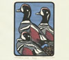 "Link to ""Harlequin Duck"" print by Chandler O'Leaery"