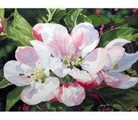 "Genny Rees ""Apple Blossoms"""
