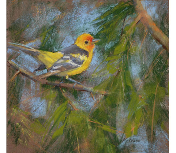 "Walsh ""Western Tanager"""